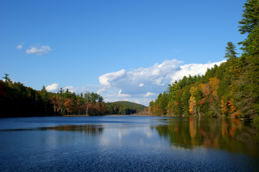 The Myers Pond Forest, managed by Hull Forestlands in Union, CT